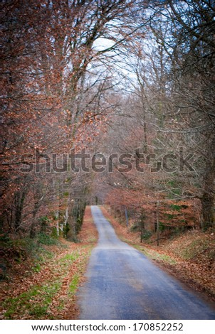 Road in forest during fall