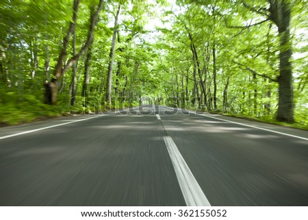 road in green forest - stock photo