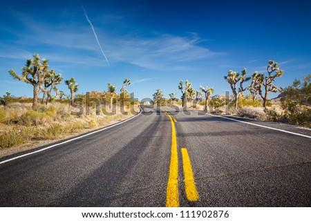 Road in Joshua Tree National Park, Mojave Desert, California - stock photo