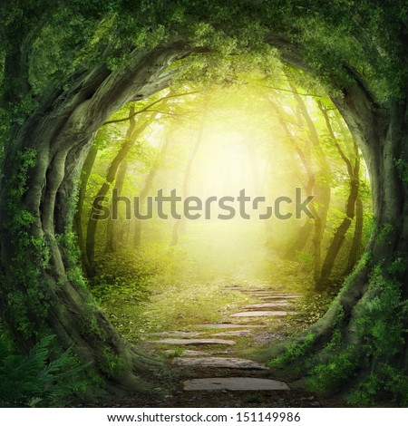 Road in magic dark forest - stock photo