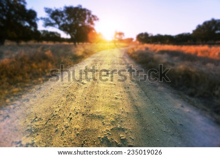 Road in  meadows - stock photo