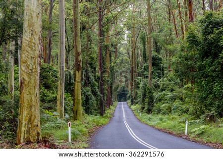 road in rain forest in Australia