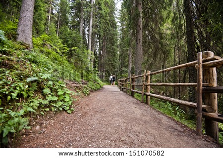 road in the alpine woods - stock photo