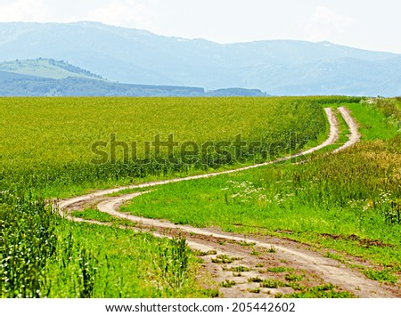 Road in the crops field by summer