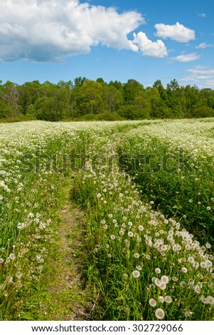 Road in the field with dandelions and blue cloudy sky - stock photo