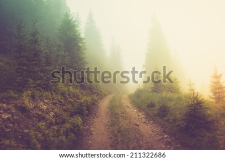 Road in the fog of the mountain forest.Filtered image:cross processed vintage effect. - stock photo