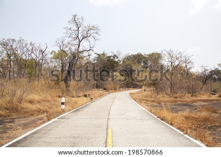 road in the forest. - stock photo