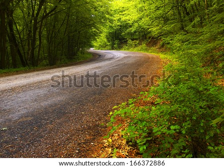 Road in the forest. Beautiful summer landscape - stock photo