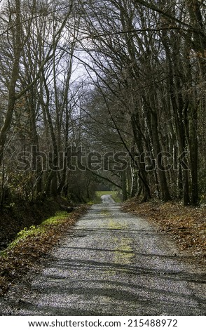 Road in the forest with leaves on the ground, typical autumn landscape