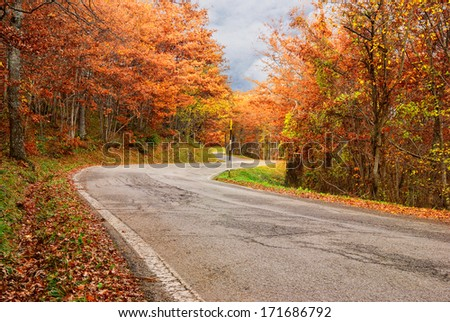 road in the wood in autumn