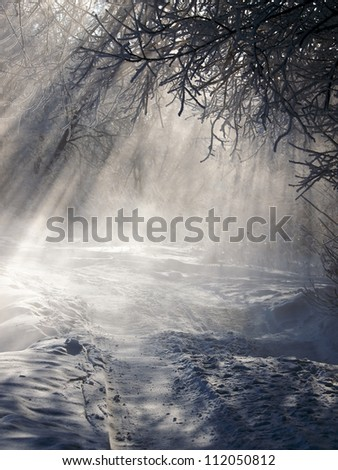 Road in winter forest with beautiful sun light. - stock photo