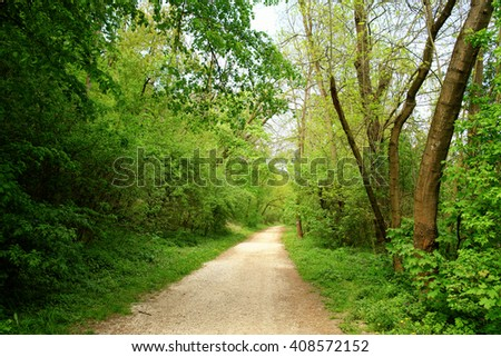 Road into forest - stock photo