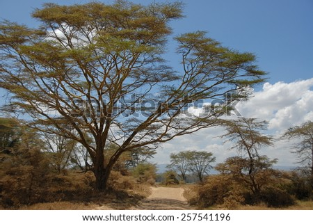 Road landscape in Lake Nakuru National Park, Kenya. - stock photo