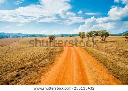 Road of savanna Field in summer season. - stock photo