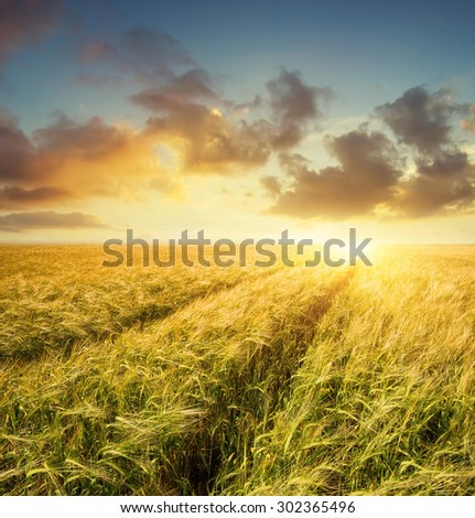 Road on field. Agricultural landscape