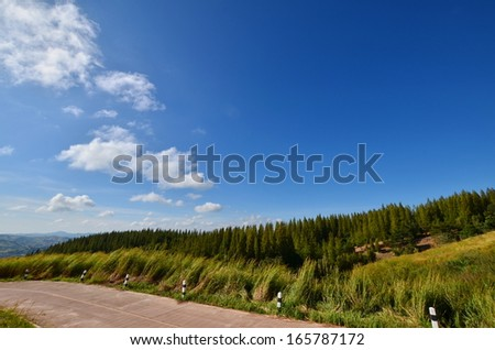 Road on the Alpine Mountain