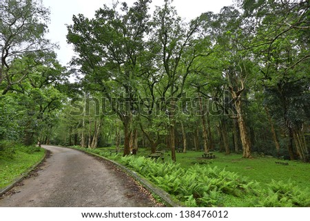 Road on the forrest - stock photo