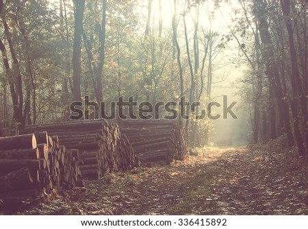 Road through a beautiful colorful forest at autumn. Vintage filter effect - stock photo