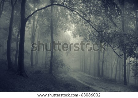 road through a beautiful forest - stock photo