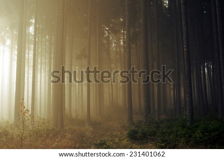 Road through a golden forest with fog and warm light - stock photo