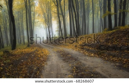 road through a misty forest with beautiful colors in autumn - stock photo
