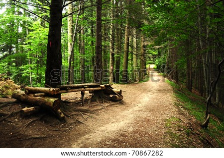 road through a scary forest at summer near a resting place - stock photo