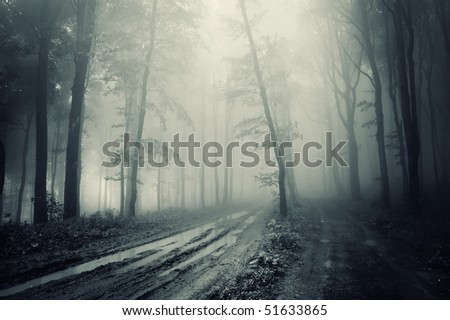 road through a spooky forest with fog - stock photo