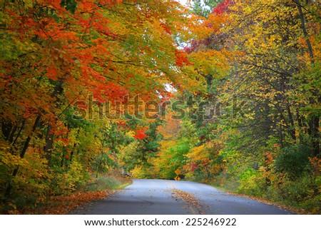 Road through bright autumn trees - stock photo