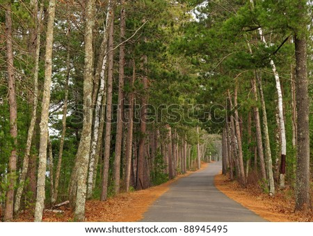 Road through forest lined with stately red pine trees and white paper birch trees with fallen orange pine needles on the ground - stock photo