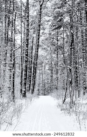 Road through frozen forest with snow black and white - stock photo