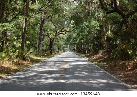 Road through the Florida forest - stock photo