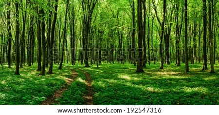 Road through the sunny spring forest - stock photo