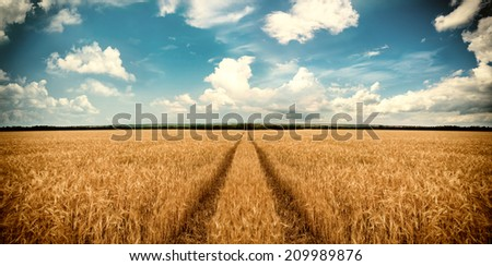 Road through wheat field. Landscape - stock photo