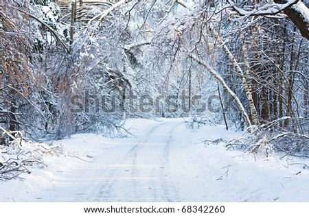 Road to snow-covered wood