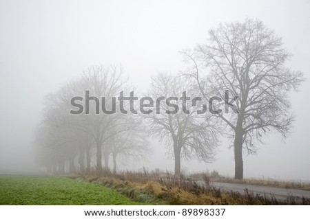 Road, trees and fog - stock photo