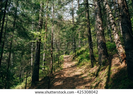 Road trek into the mountain Carpathian green spring  forest for hiking