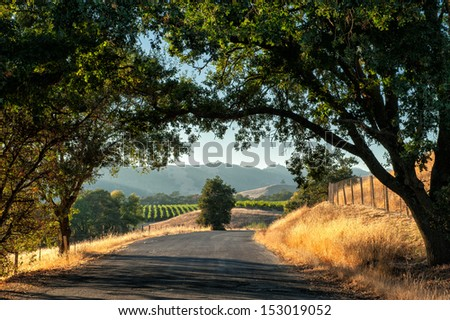 Road trip through Sonoma wine country at harvest time  - stock photo