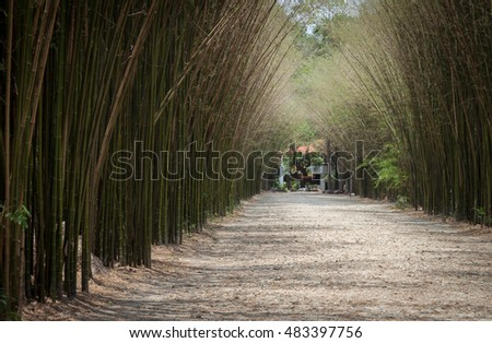 Road with Bamboo Forest