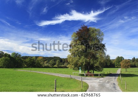 road with colorful trees in a meadow, germany - stock photo