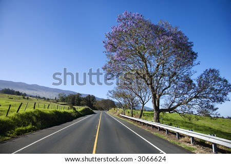 Road with Jacaranda tree blooming with purple flowers in Maui, Hawaii. - stock photo