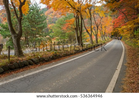 road with red yellow and green colorful maple at Kawaguchiko Japan