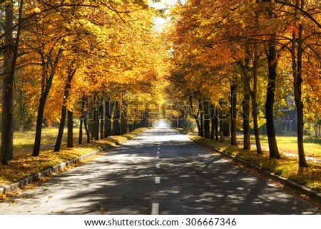 Road with tree lines of golden fall colors