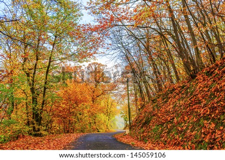Road with trees on a sunny day in autumn - stock photo