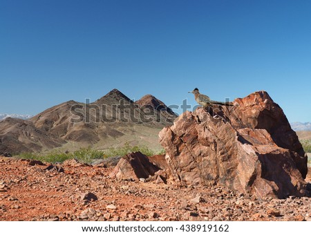 Roadrunner Perched on a Boulder in Death Valley       - stock photo