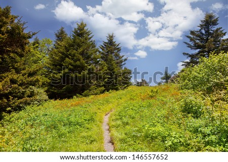 Roan Mountain - stock photo