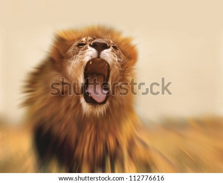 Roaring lion - stock photo