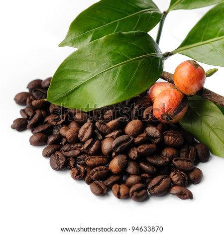 Roasted coffee beans, raw coffee seeds and coffee leaf isolated on a white background, selective focus.