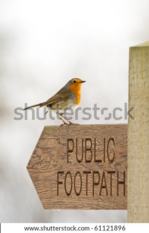 Robin (Erithacus rubecula) Perched On A Wooden Signpost