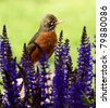 Robin in flowers - stock photo