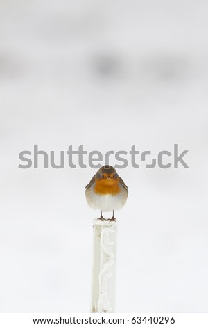 Robin in the snow in winter - stock photo